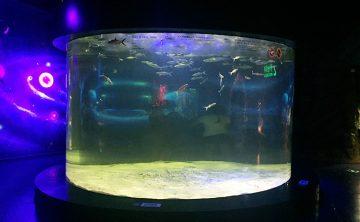 Acryl aquarium
