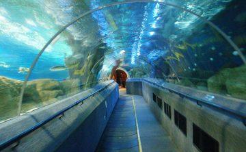Acryl tunnel